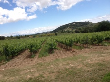 Torres Winery